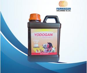 Yodogan grande (1)